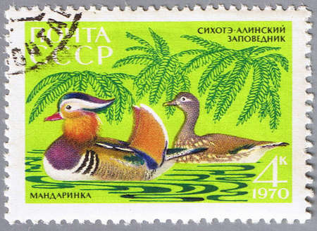 USSR - CIRCA 1970: A stamp printed in USSR shows a duck, series, circa 1970 photo
