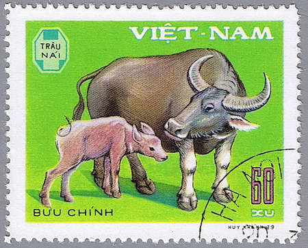VIETNAM - CIRCA 1979: A stamp printed in Vietnam shows a water buffalo and calf, series devoted to pet, circa 1979 photo