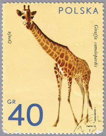 postal office: POLAND - CIRCA 1972: A stamp printed in Poland shows giraffe, series is devoted to animal zoo, circa 1972 Stock Photo
