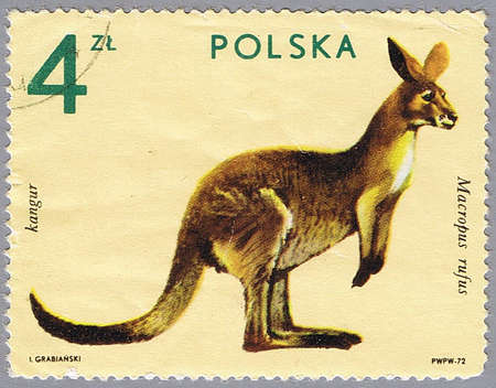 postal office: POLAND - CIRCA 1972: A stamp printed in Poland shows kangaroo, series is devoted to animal zoo, circa 1972