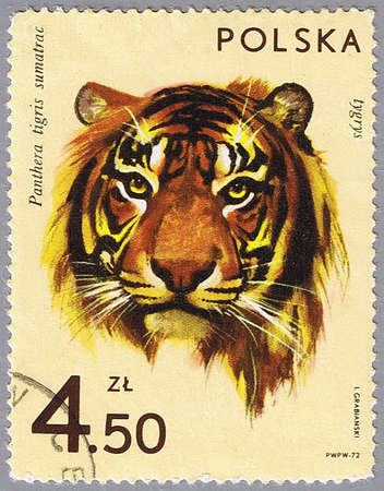 POLAND - CIRCA 1972: A stamp printed in Poland shows tiger, series is devoted to animal zoo, circa 1972 photo