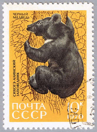 USSR - CIRCA 1970: A stamp printed in USSR shows a bear, series, circa 1970 Stock Photo - 7953514