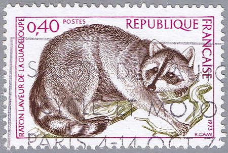 FRANCE - CIRCA 1973: A stamp printed in France shows raccoon, series, circa 1973 Stock Photo - 7953573