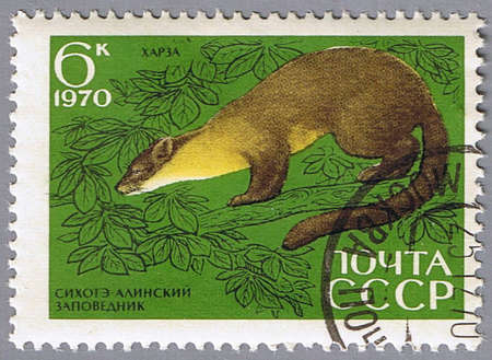 USSR - CIRCA 1970: A stamp printed in USSR shows a marten, series, circa 1970 Stock Photo - 7953456