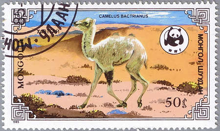 camel post: MONGOLIA - CIRCA 1985: A stamp printed in Mongolia shows camel, series devoted to the camels «Camelus Bactrianus», circa 1985 Stock Photo