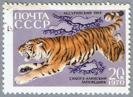 USSR - CIRCA 1970: A stamp printed in USSR shows a tiger, series, circa 1970 Stock Photo - 7953549