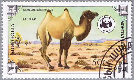 MONGOLIA - CIRCA 1985: A stamp printed in Mongolia shows camel, series devoted to the camels �Camelus Bactrianus�, circa 1985 photo