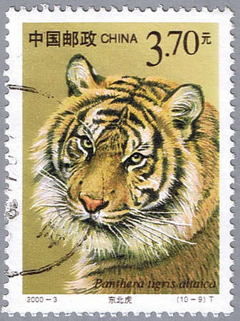 postal office: CHINA - CIRCA 2000: A stamp printed in China shows Panthera tigris altaica, series, circa 2000 Stock Photo