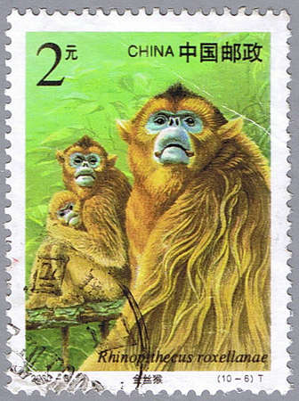 CHINA - CIRCA 2000: A stamp printed in China shows Rhinopithecus roxellanae, series, circa 2000 Stock Photo - 7953449