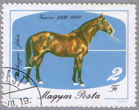 postal office: HUNGARY - CIRCA 1985: A stamp printed in Hungary shows a horse, a series devoted to the outstanding sports horses from different years, circa 1985 Stock Photo