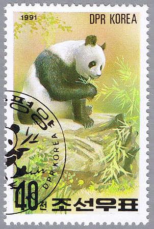 DPRK - CIRCA 1991: A stamp printed in DPRK shows panda, series, circa 1991 Stock Photo - 7953585