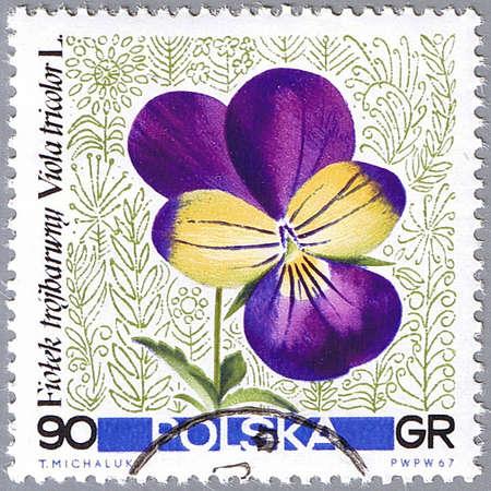 POLAND - CIRCA 1967: A stamp printed in Poland shows Pansy, series, circa 1967 photo