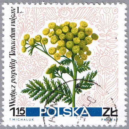 POLAND - CIRCA 1967: A stamp printed in Poland shows common pansy, series, circa 1967 photo