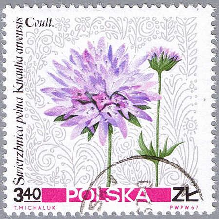 POLAND - CIRCA 1967: A stamp printed in Poland shows wild aster, series, circa 1967 photo