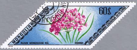 philatelic: MONGOLIA - CIRCA 1975: A stamp printed in Mongolia shows Allium mongolicum, series, circa 1975