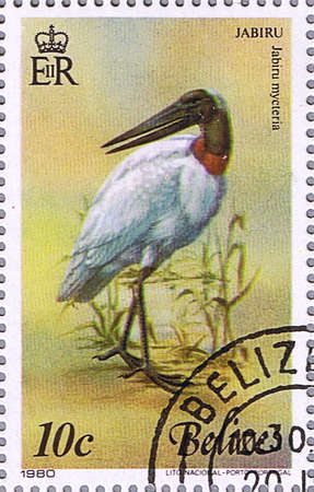 BELIZE - CIRCA 1980: A stamp printed in Belize shows Jabiru, series devoted to the birds, circa 1980