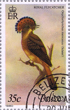 BELIZE - CIRCA 1980: A stamp printed in Belize shows Royal flycatcher, series devoted to the birds, circa 1980