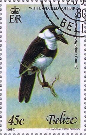 BELIZE - CIRCA 1980: A stamp printed in Belize shows White-necked puffbird, series devoted to the birds, circa 1980