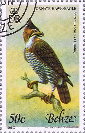 BELIZE - CIRCA 1980: A stamp printed in Belize shows ornate hawk-eagle, series devoted to the birds, circa 1980 Stock Photo