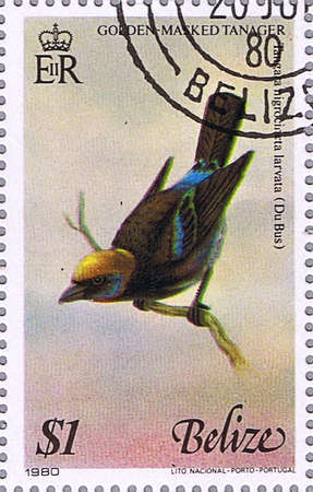 BELIZE - CIRCA 1980: A stamp printed in Belize shows golden-masked tanager, series devoted to the birds, circa 1980