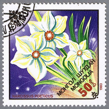 philatelic: MONGOLIA - CIRCA 1983: A stamp printed in Mongolia shows narcissus, series, circa 1983