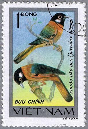 laughingthrush: VIETNAM - CIRCA 1978: A stamp printed in Vietnam shows Garrulax yersini or collared laughingthrush, series devoted to the songbirds, circa 1978
