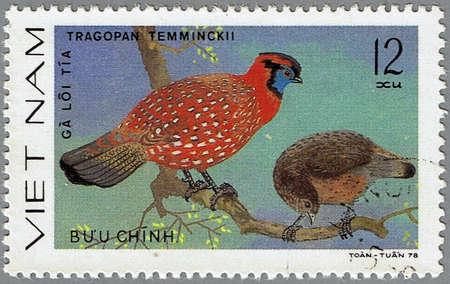 VIETNAM - CIRCA 1978: A stamp printed in Vietnam shows Tragopan temminckii or Temmincks Tragopan, series devoted to the ornamental birds, circa 1978 photo