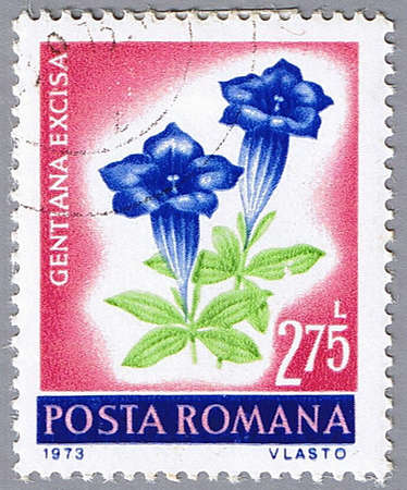 gentian flower: ROMANIA � CIRCA 1973: A stamp printed in Romania shows Gentiana excisa, series, circa 1973