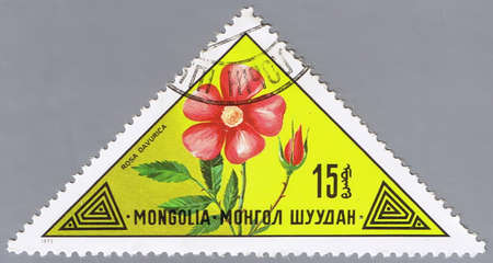 MONGOLIA - CIRCA 1973: A stamp printed in Mongolia shows a flower, series, circa 1973 photo