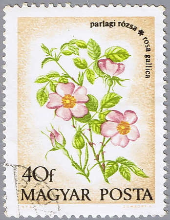 postal office: HUNGARY - CIRCA 1973: A stamp printed in Hungary shows Provence roses, a series devoted to flowers, circa 1973