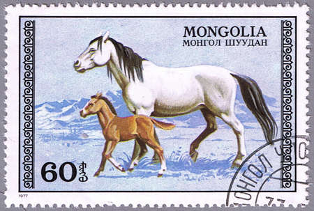 mongolia horse: MONGOLIA - CIRCA 1977: A stamp printed in Mongolia shows the mare and foal, a series devoted to horses, circa 1977