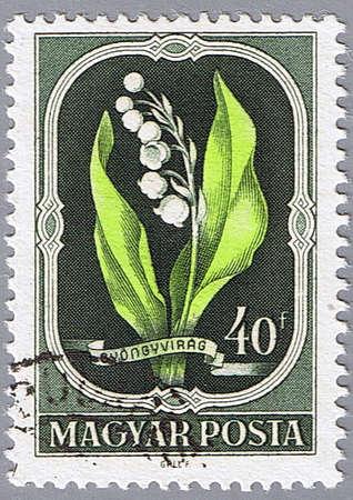 postmark: UNGARN - CIRCA 1951: Ein Stempel in Ungarn gedruckt zeigt Lily of the Valley, Serie, circa 1951 Lizenzfreie Bilder