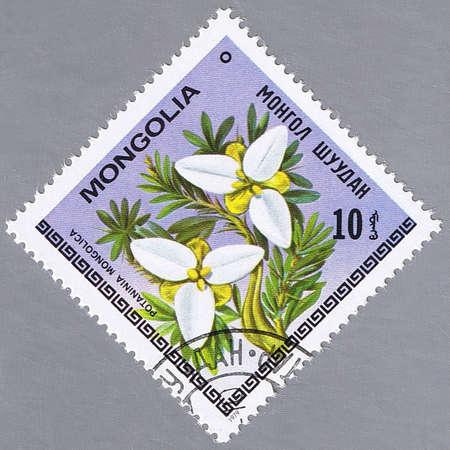 MONGOLIA - CIRCA 1979: A stamp printed in Mongolia shows Potaninia Mongolica, series, circa 1979 photo