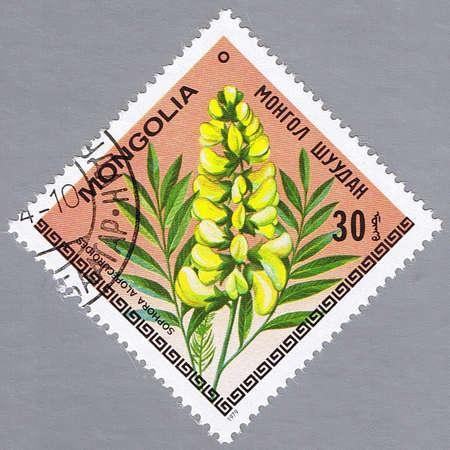 MONGOLIA - CIRCA 1979: A stamp printed in Mongolia shows Sophora alopecuroides, series, circa 1979 photo