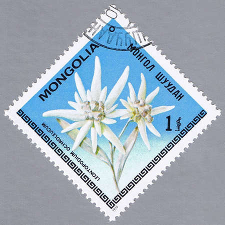 MONGOLIA - CIRCA 1979: A stamp printed in Mongolia shows Edelweiss, series, circa 1979 Stock Photo - 10648331