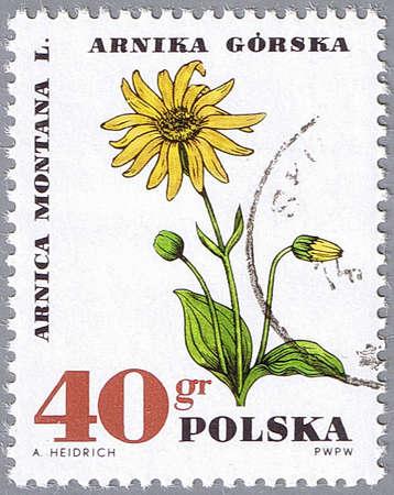 POLAND - CIRCA 1967: A stamp printed in Poland shows mountain arnica, series, circa 1967 photo