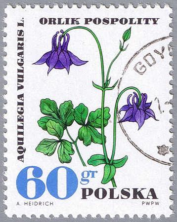POLAND - CIRCA 1967: A stamp printed in Poland shows columbine, series, circa 1967 photo