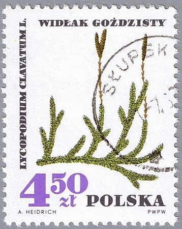 POLONIA - CIRCA 1967: Un sello impreso en Polonia muestra pino suelo, serie, alrededor de 1967