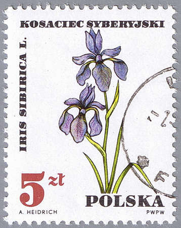 POLAND - CIRCA 1967: A stamp printed in Poland shows iris sibirica, series, circa 1967 Stock Photo