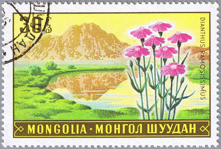 MONGOLIA - CIRCA 1969: A stamp printed in Mongolia shows Dianthus ramosissimus, series, circa 1969 Stock Photo - 10648357