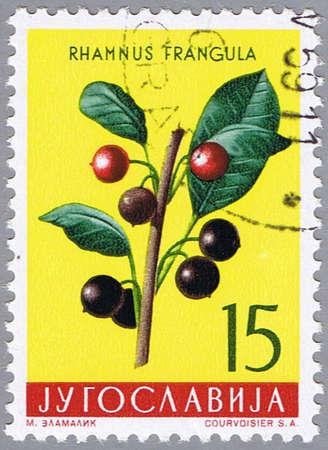 yugoslavia: YUGOSLAVIA - CIRCA 1959: A stamp printed in Yugoslavia shows black alder, series, circa 1959 Stock Photo