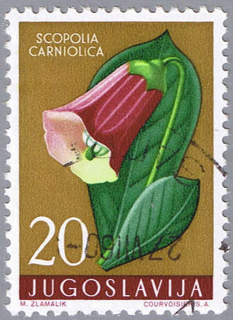 yugoslavia: YUGOSLAVIA - CIRCA 1959: A stamp printed in Yugoslavia shows scopolia, series, circa 1959