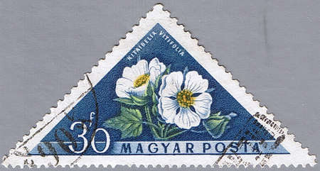 HUNGARY - CIRCA 1958: A stamp printed in Hungary shows Kitaibelia vitifolia, series, circa 1958 photo