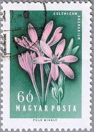 HUNGARY - CIRCA 1958: A stamp printed in Hungary shows Crocuses, series, circa 1958 Stock Photo - 10648326