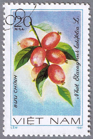 VIETNAM - CIRCA 1981: A stamp printed in Vietnam shows Elaeagnus latifolia, series devoted to fruits, circa 1981