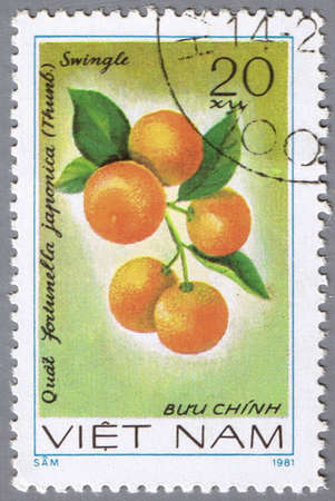 VIETNAM - CIRCA 1981: A stamp printed in Vietnam shows Fortunella japonica, series devoted to fruits, circa 1981 Stock Photo - 10645497