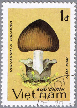 VIETNAM - CIRCA 1983: A stamp printed in Vietnam shows Volvariella volvacea, series, circa 1983 photo