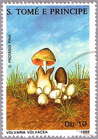 ST. THOMAS AND PRINCE ISLANDS - CIRCA 1988: A stamp printed in St. Thomas and prince islands shows Volvariella volvacea or straw mushroom or paddy straw mushroom, series, circa 1988 photo