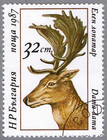 BULGARIA - CIRCA 1987: A stamp printed in Bulgaria shows Fallow Deer, series is devoted to animals of the deer family, circa 1987 Stock Photo
