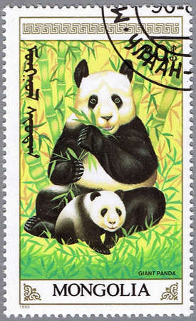 MONGOLIA - CIRCA 1990: A stamp printed in Mongolia shows an adult giant panda and cub, series, circa 1990